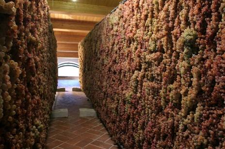 Vagnoni grapes